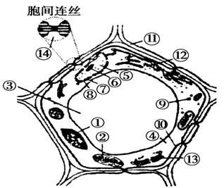 Ⅰ(7分)下图为某生物的细胞结构模式图,据图回答