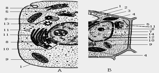 组卷网 高中生物综合库 分子与细胞 细胞的结构和功能  (1)图中结构[1