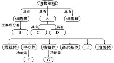 (7分)完成下面有关动物细胞结构和功能的概念图.