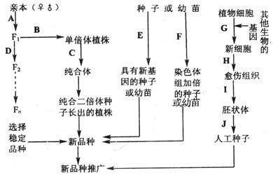 2010-2011学年河北省南宫中学高一5月月考生物试卷