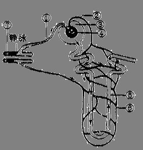 下图为肾单位的结构示意图,请据图回答问题.(8分)