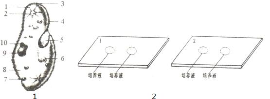 如图1是草履虫结构图,读图完成填空.