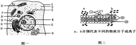 如图为高等动物细胞及细胞膜的亚显微结构模式图,请回答:([]中填数字