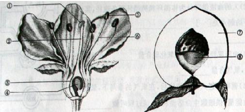 试卷详情  (1)从构成生物体的结构层次上分析,我们平时所吃的桃属于