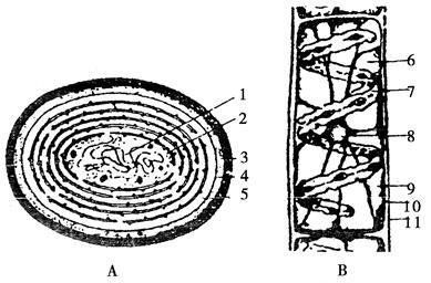 【题文】图中的a为蓝藻细胞结构示意图,b为水绵细胞结构示意图.