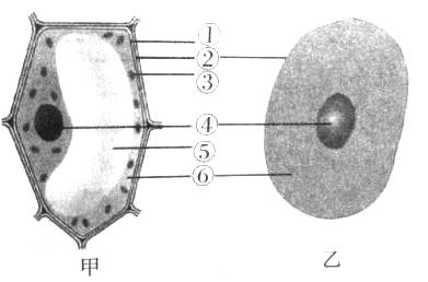 图中甲乙分别是植物,动物细胞结构模式图,请据图回答下列问题.