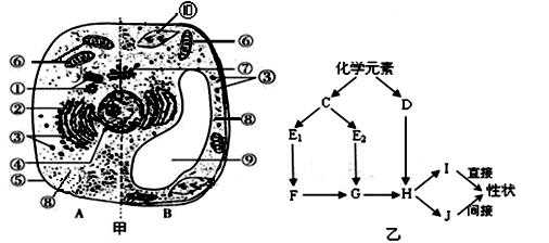 c,h,o,n,p,s在玉米和人细胞(干重)以及活细胞中的含量(%)如下表,请