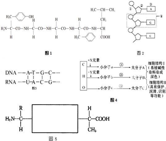 (1)图1是一个多肽化合物的结构图.