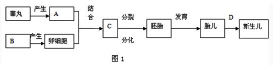 图1是有关人体生殖发育的概念图,图2是女性生殖系统示意图,回答