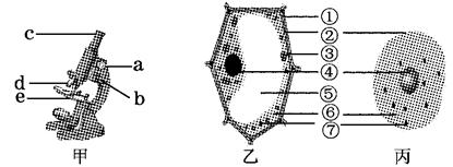 """细胞分别为显微镜,植物和视频动物下图示意图,请根据题意在""""[]""""中鹿初中唱歌晗结构图片"""
