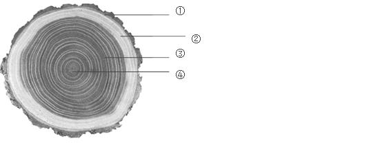如图是植物茎的横切面结构示意图,据图回答