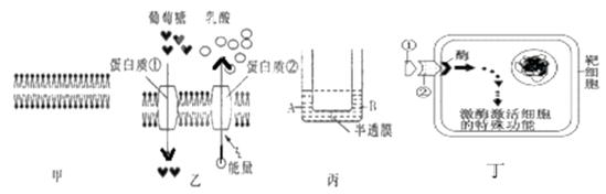 俄罗斯科学家V.S.Chardakov设计的简单有效的测定植物组织细胞中细胞液浓度的方法,如下图所示:  说明:a、b为一组,同组试管内溶液浓度相等且已知。建立多个组别,并在组间形成浓度梯度。向各组中的a试管中同时放置相同的植物组织,向b试管中加入一小粒亚甲基蓝结晶(它对溶液浓度影响很小,可忽略不计),使溶液呈蓝色。一定时间后,同时取出植物组织(见A图)。从b试管中吸取蓝色溶液,小心滴一滴到同组a试管溶液中,如果a试管溶液浓度已增大,蓝色溶液小滴将漂浮在无色溶液上面;如果a试管溶液浓度已下降,蓝色溶液