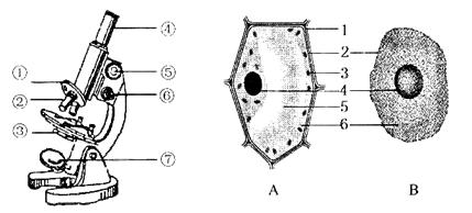 下图分别为显微镜结构和细胞结构示意图,请据图回答下列问题