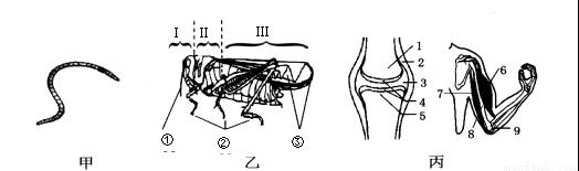 (一)下列是与动物运动有关的结构示意图,请据图分析回答