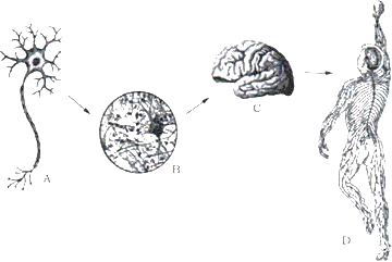 动物细胞简图手绘