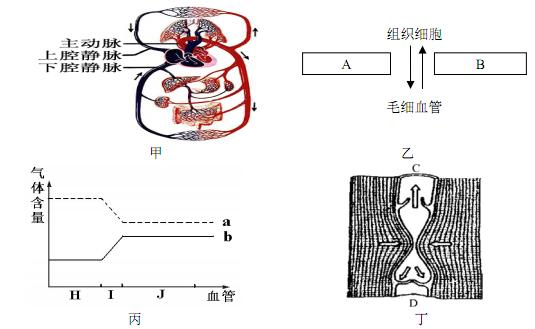 人体血液循环由体循环和肺循环组成,它们共同循环规律是:心室→动脉图片