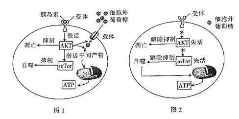 图1表示某细胞内的部分细胞结构,图2是该细胞的细胞膜结构(其中a和b为