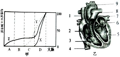 乙是人体心脏结构示意图.
