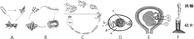 下图为鸽卵的结构图,请据图回答