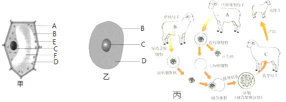 如图是植物细胞,动物细胞的结构以及克隆羊多莉示意图,据图回答