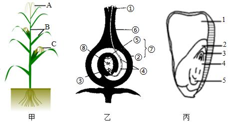初中生物综合库 生物圈中的绿色植物 绿色开花植物的一生 开花和结果