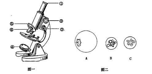 """如图是显微镜结构图及某同学""""用显微镜观察人口腔上皮"""