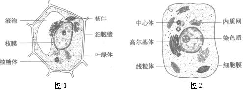 湖北省武汉市部分学校2020-2021学年高三10月联考生物试题