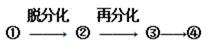 宁夏石嘴山市三中2020-2021学年高三上学期第一次月考生物试题(补习班)
